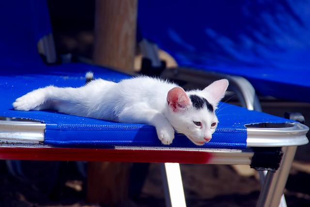 kitten in lassi, kefalonia