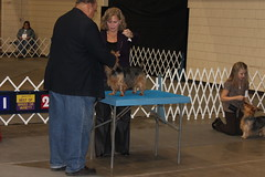 Rapid City Dog show 2009