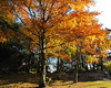 In the park (flips99) Tags: park autumn light orange tree sol sunshine norway october autumncolours tre 2009 høst rogaland karmøy skudeneshavn høstfarger thechallengefactory canonpowershotsx200is