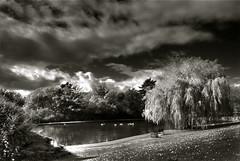 park & pond (larz_73) Tags: trees sky canada clouds pond britishcolumbia victoria vancouverisland hollandpointpark