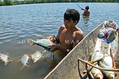 Pesca em lago da Adeia Aiha - Etnia Kalapalo (Delfim Martins) Tags: indgenas lago alimento cerrado pesca canoa aldeia ndios kalapalo regiocentrooeste parqueindgenadoxingu