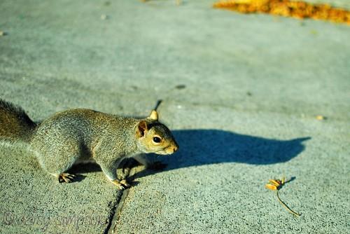 super close squirrel