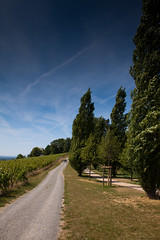 Vinepath (JBZ) Tags: park tree day path vine clear vineyards baum wein auerbach bensheim weinberge frstenlager