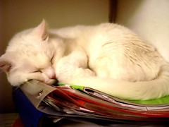 Ecco come usiamo libri e quaderni! (Giorgina Woolf) Tags: studio riposo libri uga gatto bianco dormire scuola micia gatta quaderni studiare