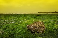 Kuwait (YOUSEF AL-OBAIDLY) Tags: filter kuwait yellowfilter yousef الكويت كويت aplusphoto فلتر لاندسكيب فلاتر يوسفالعبيدلي شاطئشويخ فلتراصفر