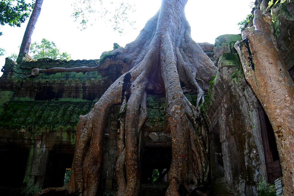 El árbol voraz