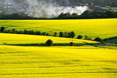 Rapeseed and fire (algo) Tags: england yellow topv111 photography topf50 smoke topv777 algo topf100 hedges rapeseed ivinghoebeacon naturesfinest chilternhills supershot abigfave
