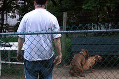 Dog Rape (Venessa Nina) Tags: nyc dog photography dangerous moron rape pitbull queens breeding nina pitbulls owners venessa fivefootmohawk venessaninaphotography