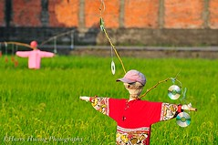 3_D307067-Asia Scarecrow, Taiwan ------ (HarryTaiwan) Tags: plant green field grass hat wall standing landscape asia rice scarecrow artificial farmland growth crop  protection  cultivated  strawman   cropland   ruralscene        harryhuang hgf78354ms35hinetnet