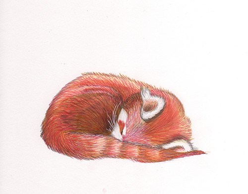 sleeping fox by www.sandradieckmann.com.