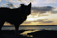 Dusk with Indy (Mike & Indy) Tags: sunset dog beach dogs michael collie dusk border indy jackson farrah fawcett llanfairfechan
