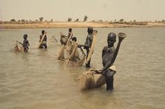 Pche dans le Logone. Tchad (courregesg) Tags: africa fishing young tribal tradition ethnic fleuve afrique jeune pche tchad
