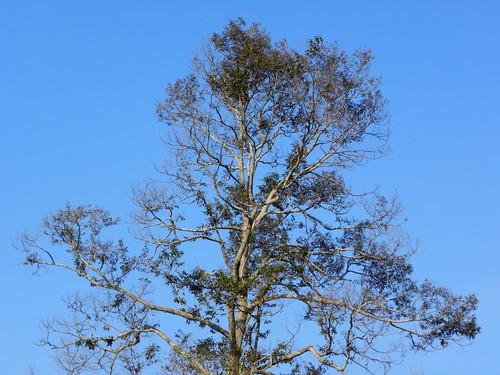 Sg Ayam | Di pohon itu