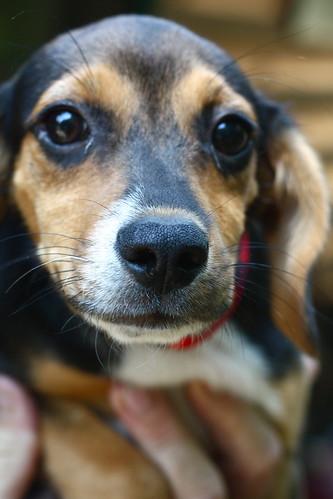 Meet Otis.