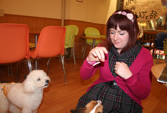 DOG CAFE!!! KAWAII!!