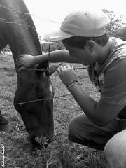 R. Califf (Andressa Rafaela) Tags: horse animal brasil fauna phone action ao motorola cavalo menino hellomoto z6 andressarafaela abouttabs