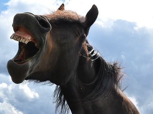 Laughing Horse by jafro77, on Flickr