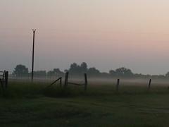fannin county fog