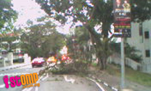 Tree branch snaps off, nearly injures pedestrians