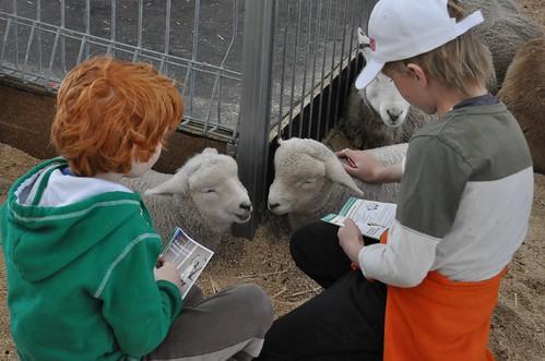lambs 90