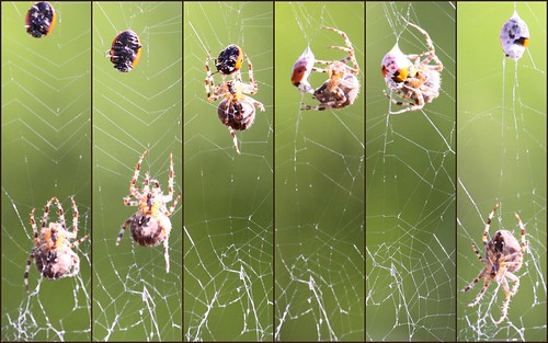 Spider and Ladybird
