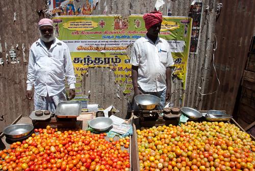 Scène de vie commerçante : les vendeurs de tomates