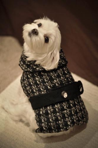 Mocha Chanel