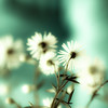 I guess it's not all bad being a worm (harold.lloyd) Tags: bw hoodie scenery bokeh daisy worm 50mmf14 hbw daisery verymuchnotbigben