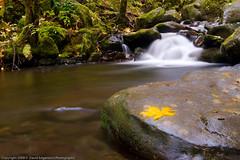 Little falls (dedge555) Tags: green rock creek waterfall moss nikon nikkor 30seconds 30secondexposure 2470mm autumnstream d700 nikond700 2470mmf28g afsnikkor2470mmf28ged varinduo