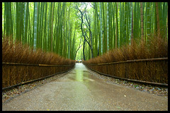 Return to Arashiyama (Eric Flexyourhead) Tags: green wet japan forest kyoto path bamboo arashiyama   raining kansai damp  zd   1260mm olympuse3