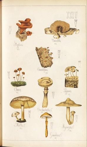 Stypticus, Variabilis, Amadelphus, Clarus, Pygmoeus et al spp.