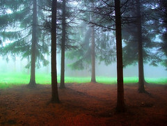 Uros Petrovic - Forest In The Mist (Uros Petrovic) Tags: trees light mist uros fog forest magic serbia pines petrovic srbija mistical worldthroughmyeyes ozren sokobanja