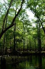 Fort Stewart ecosystem