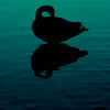 The Last Light on Still Water. (aparticulate) Tags: blue light lake bird water silhouette contrast delete5 delete2 duck drops still focus delete6 save3 delete3 save7 save8 delete delete4 save save9 save4 flies save5 save10 savedbythehotboxuncensoredgroup