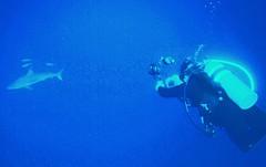 5.8 ft diver races towards 6ft shark (stephenweir) Tags: shark bigshark reefshark 9ftshark caymanislands deepdive camera diverwithcamera caymanbrac blacktip