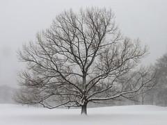 Snow Day #6 (Keith Michael NYC (2 Million+ Views)) Tags: manhattan newyorkcity newyork ny nyc snow centralpark