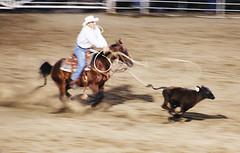 Rodeo 10-Cody (Wyoming) Stampede (McKDave) Tags: rodeo wyoming cody stampede