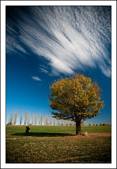 A Man and His Tree (Matthew Stewart | Photographer) Tags: autumn leaves matthew mel josh brett stewart nsw newsouthwales tenterfield gleninnes alemdagqualityonlyclub