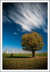 A Man and His Tree (Matthew Stewart | Photographer) Tags: autumn leaves matthew mel josh brett stewart nsw newsouthwales tenterfield gleninnes alemdagqualityonlyclub