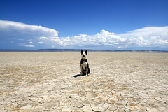 Alvord Desert Dog (estenard) Tags: oregon malheurnationalwildliferefuge