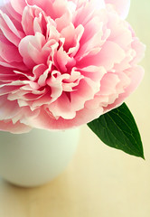 salmon peony (Something To See) Tags: pink summer flower garden peony vase blooming cutflowerswithprettystems conceptofflower