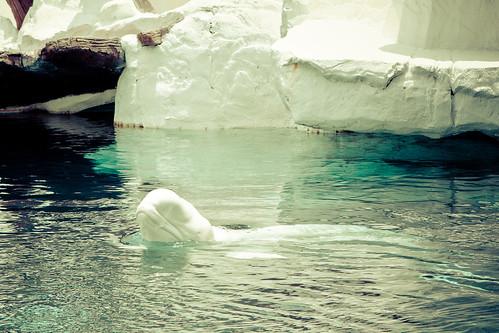 I <3 Beluga's