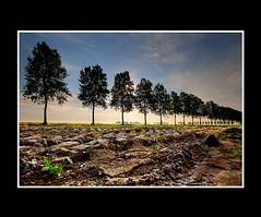 Landscape (Theo Kelderman) Tags: trees netherlands landscape bomen nederland polder klei 2009 landschap haarlemmermeer theokeldermanphotography