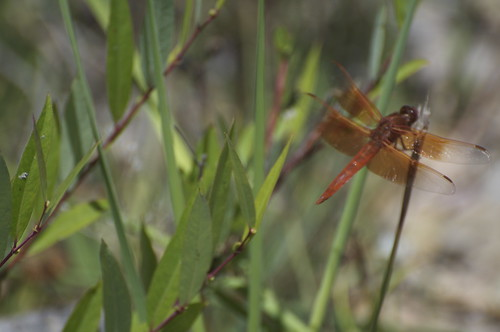 And dragonflies are mating.