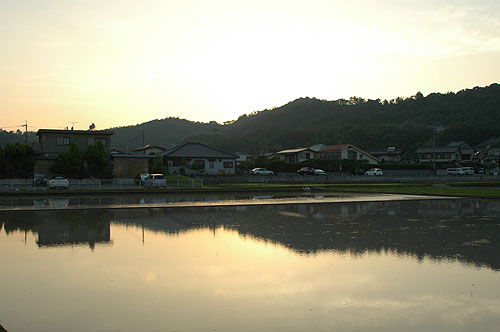 夕方の水田