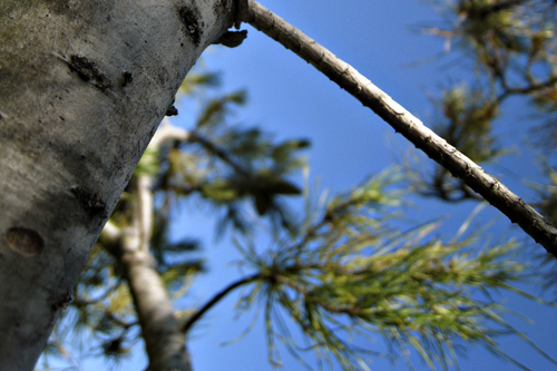 july0109_tree4