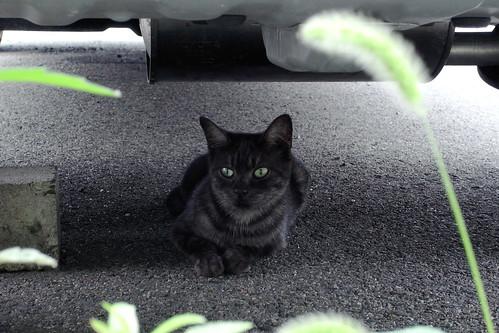 Today's Cat@20090709