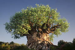 The Magnificent Tree of Life