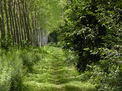 Verdi prospettive (darko82) Tags: wood trees green alberi path trail sentiero bosco vede