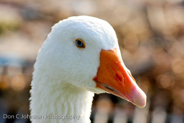 duckpond-119